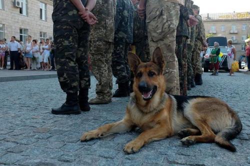 Разом із військовими до Черкас повернувся легендарний Бімба (ФОТО)