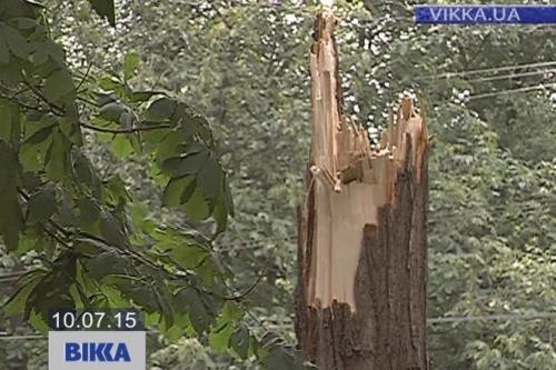Дерево розтрощило черкащанину машину (ВІДЕО)
