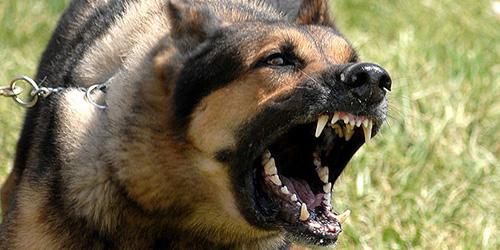 Скажені тварини покусали людей у трьох районах