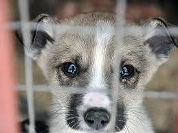 Задля допомоги тваринам черкащани продавали свої послуги (ВІДЕО)