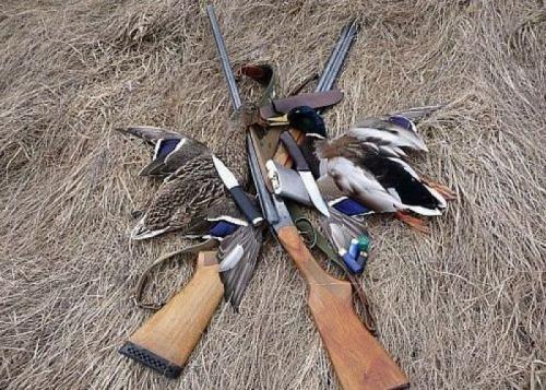 На Черкащині стартував сезон полювання на пернату дичину