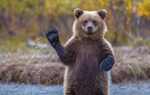 Черкаські ведмеді рятуються від спеки холодним душем
