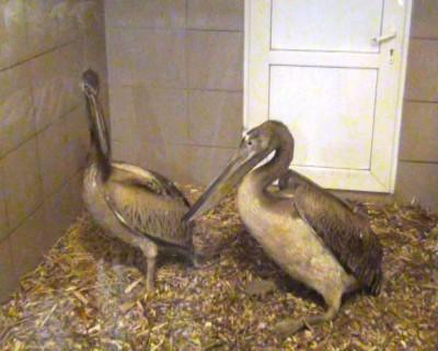 Екзотичні птахи успішно прижилися у черкаському зоопарку