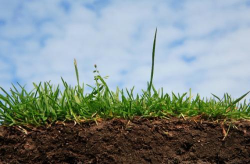 Земельний конфлікт на Тальнівщині: зібрали врожай та допомогли АТОвцям