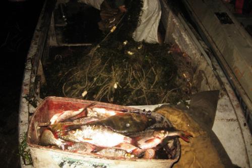 На Золотоніщині чоловіки наловили риби на сім тисяч гривень