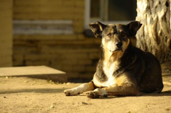 На Черкащині підприємець вже рік відстрілює собак (ВІДЕО)