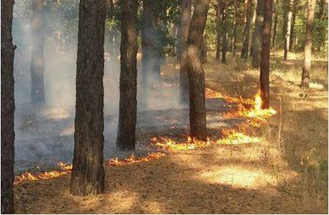 У Свидівку рятували ліс від масштабної пожежі (ФОТО)
