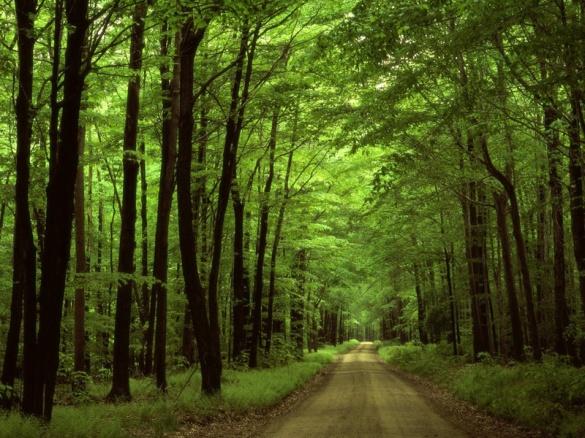 П'ятірка дерев Черкащини з загадковою історією (ФОТО)