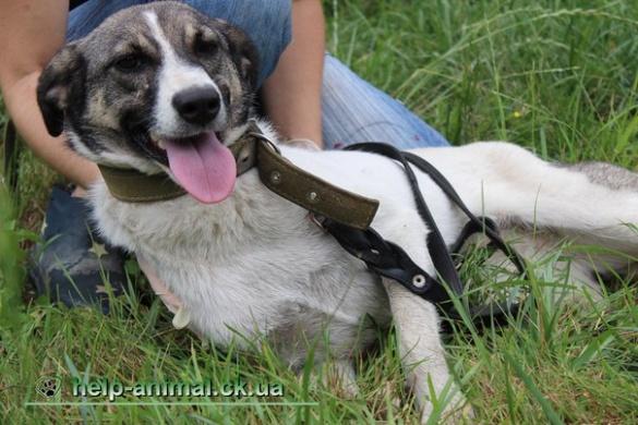 Черкащанам пропонують стати господарем екзотичної собаки (ФОТО)
