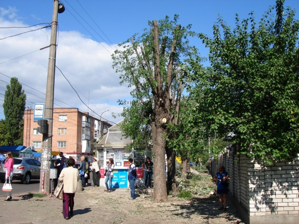 Черкащани збентежені: замість зелених дерев залишаються стовбури (ФОТО)