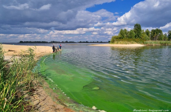 Черкащани дивуються й досі зеленому Дніпру (ФОТО)