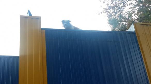 У Черкасах на даху магазину гуляє пес (фото)