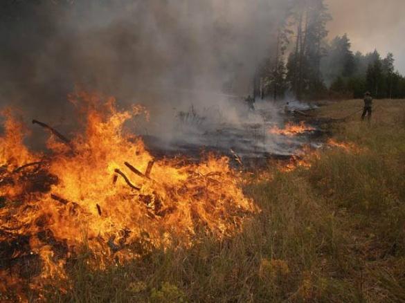 Ліси на Черкащині горять: за день ліквідували чотири пожежі