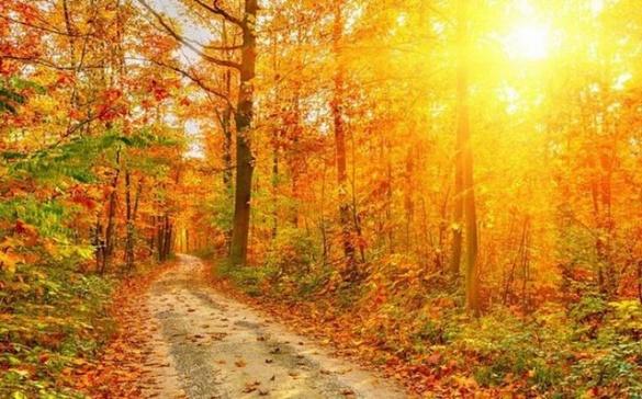 На Черкащину нарешті прийшла справжня осінь, але буде холодно