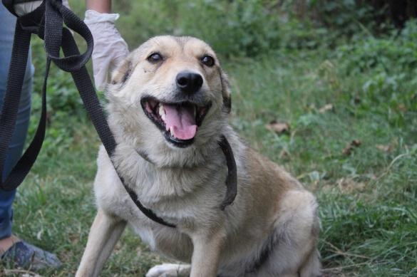 У Черкасах волонтери шукають теплий дім для собаки