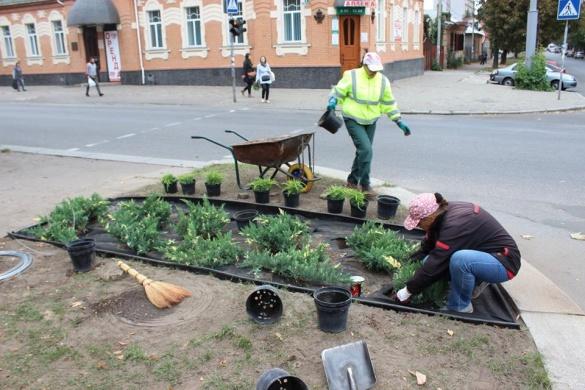 На центральній алеї Черкас висадили рослини з металічною сіткою (ФОТО)