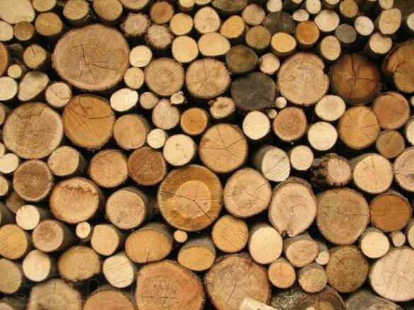 На Черкащині викрили контрабанду по дереву