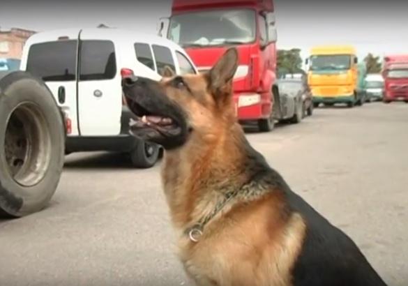 На черкаській митниці служить собака, яка за секунди виявляє євро і долари