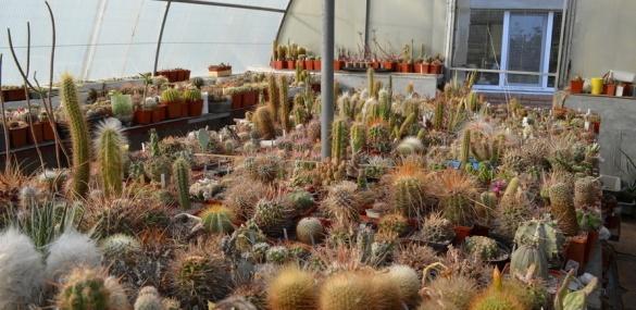 Черкащани колекціонують кактуси та пінгвінів (ФОТО)