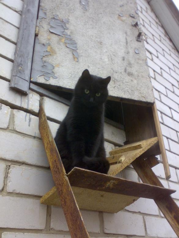 У Черкасах розшукують зниклу кішку