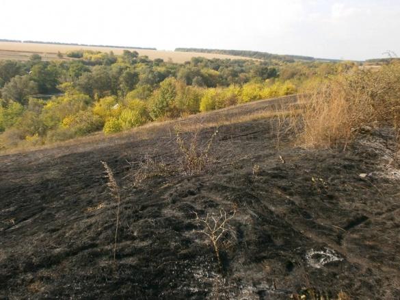 Катеринопільські рятувальники вберегли від вогню поле з кукурудзою