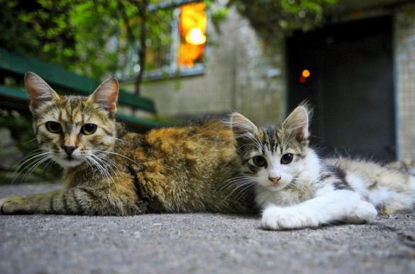 Черкаське подружжя створило справжній рай для котів