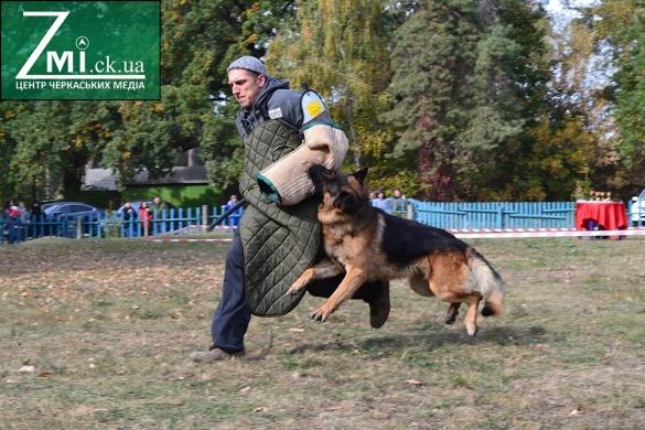 Собака-супермен, охоронець та рятівник: фестиваль чотирилапих у Черкасах (ФОТО, ВІДЕО)