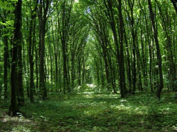 Канівські ліси визначили одними із найкрасивіших в Україні