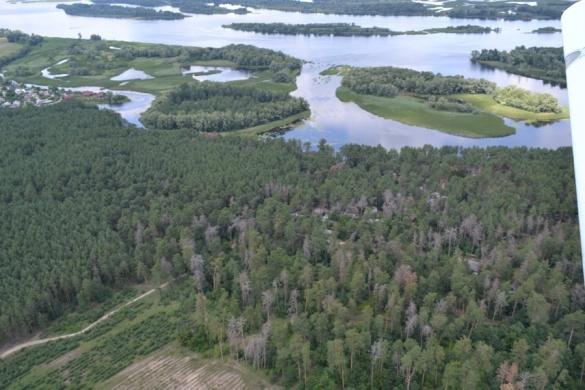 Ліс поблизу Черкас: фото з висоти пташиного польоту