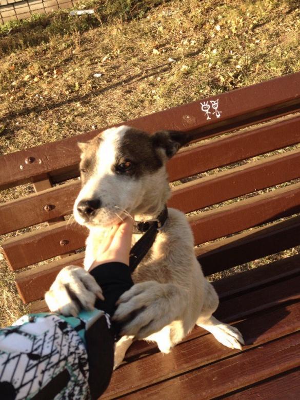 У Черкасах собака чекає господаря на лавці (ФОТО)