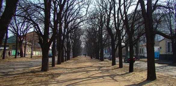 Бульвар Шевченка у Черкасах схожий на село? (ВІДЕО)