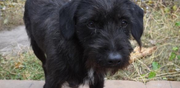 Черкаські бродячі собаки стали зірками місцевого ТБ (ВІДЕО)