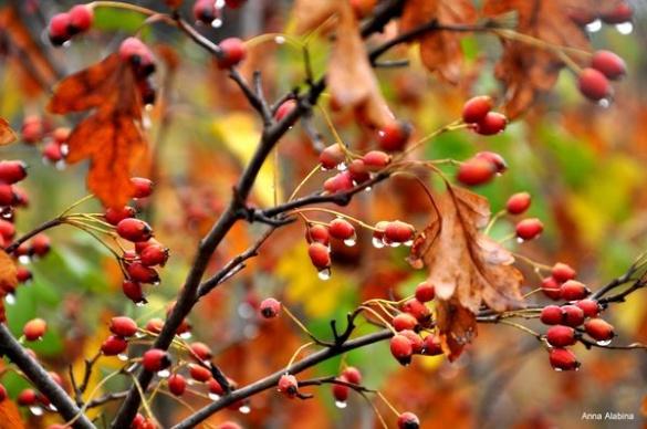 На Черкащині неймовірна осіння