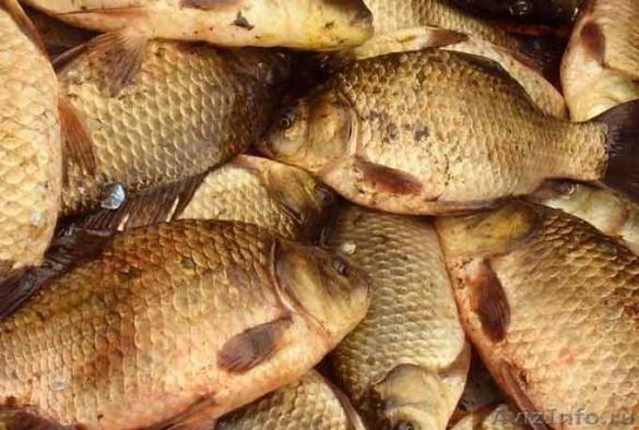 На Черкащині визначили місця, де не можна ловити рибу