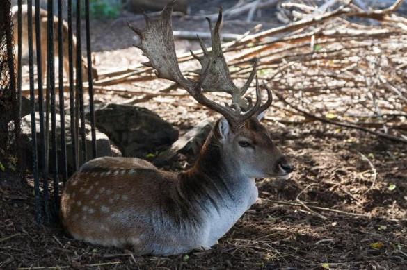 Мешканцям черкаського зоопарку утеплюють вольєри