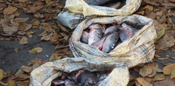 Як правоохоронці у Черкасах рибу ловили (ВІДЕО)