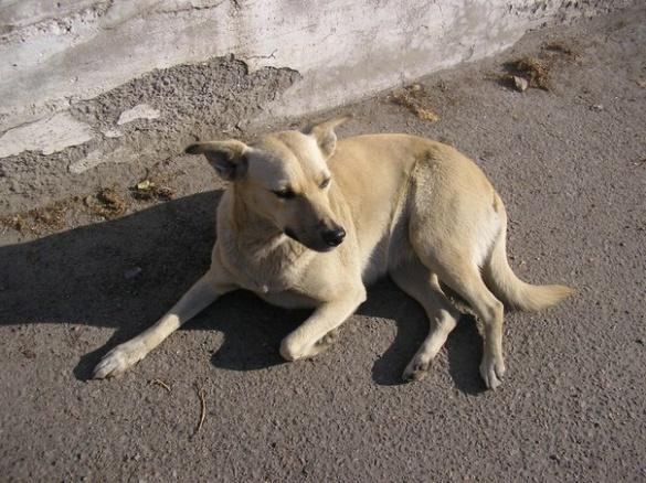 У Черкасах шукають нову домівку для собаки