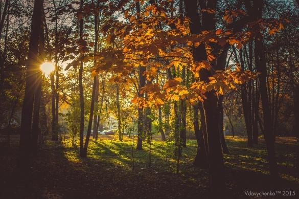 Казкові пейзажі Черкас: Ювілейний парк очима фотографів