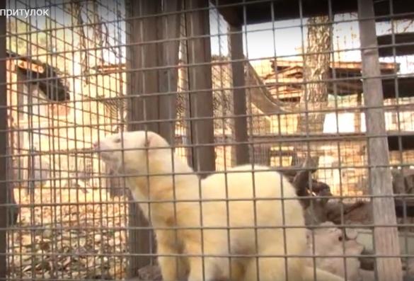 У черкаському зоопарку обурені відмовами господарів від своїх тварин
