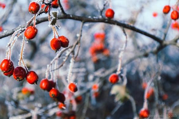 Черкаські синоптики прогнозують контрастну зиму