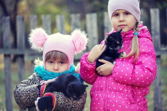 У Черкасах шукають домівку для двох крихітних кошенят