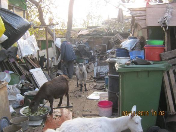 Черкащанин у центрі міста тримає десяток кіз (ФОТО)