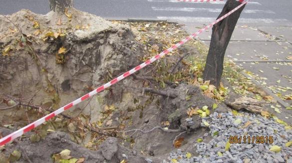 У Черкасах невідомі понівечили дерева (ФОТО)