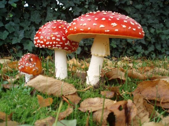 У Черкаській області поменшало випадків отруєння грибами