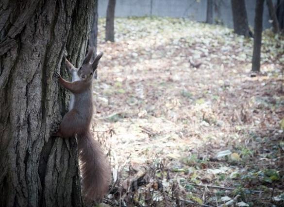У черкаському парку живуть неймовірно безстрашні білки (ФОТО)