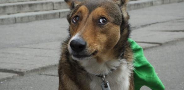 У центрі Черкас жінка співала разом із собакою Розою (ВІДЕО)