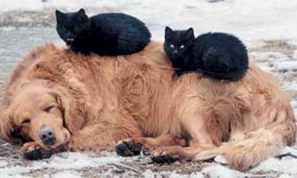 Волонтери покажуть фільм про життя черкаських бездомних тварин