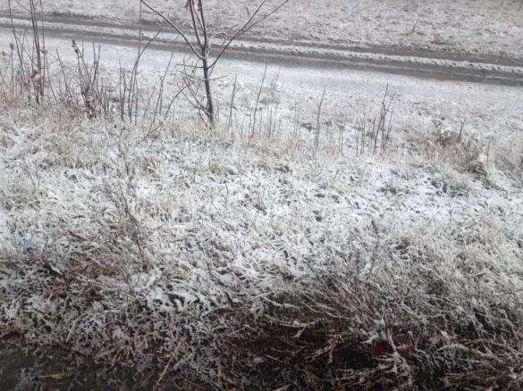 На Черкащині випав перший сніг (ФОТО)