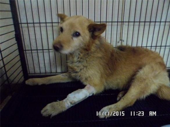 У Мошнах збита собака понад добу пролежала біля дороги