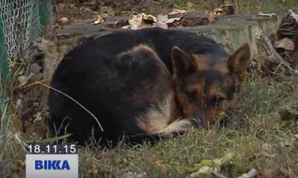 У Черкасах покинутий собака два місяці чекає на господарів